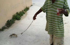 Weird photo of the day | Man walking his pet crab