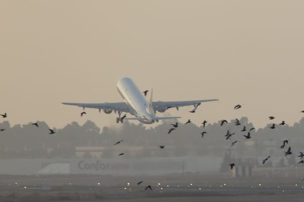 Planes_and_birds_(6235298336)