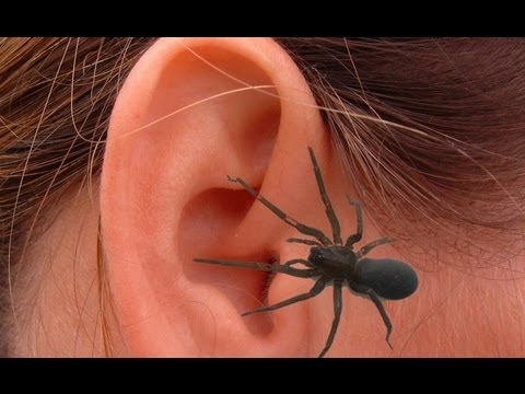 Spiders in the ear