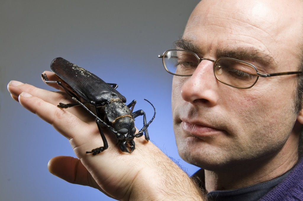 Top 5 weird and scary giant bugs