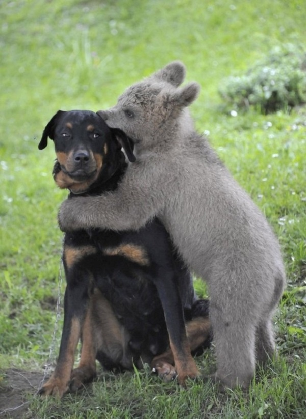 Animals in weird situations