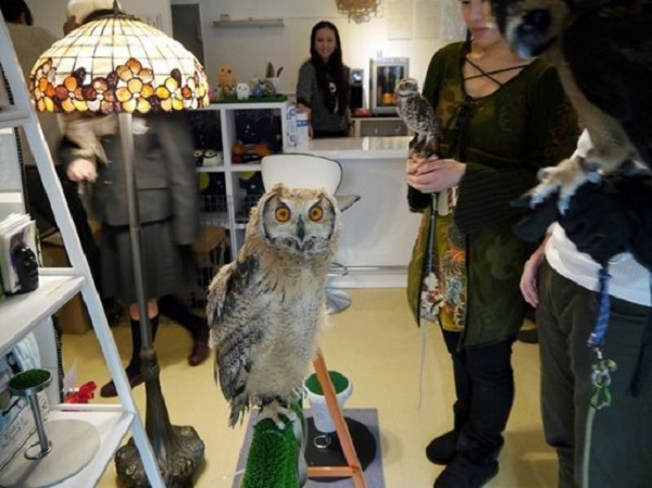 Strange cafes with owls in Japan