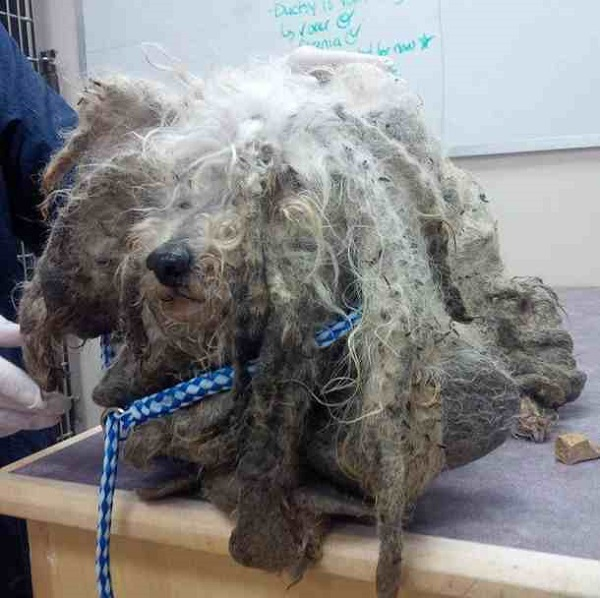 The transformation of an abandoned dog