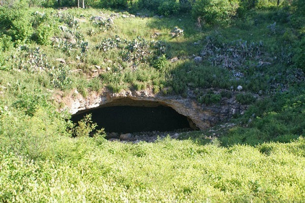 Bracken cave, Bat colony